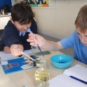 Room 4 Science - Mixing oil and water
